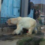 上野動物園ソロプレイ